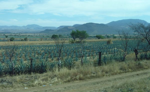 Jalisco's Tequila Trail