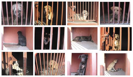 Mexico City dogs