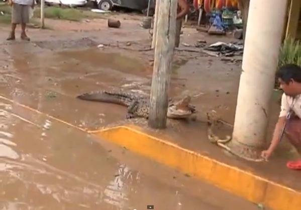 Acapulco croc