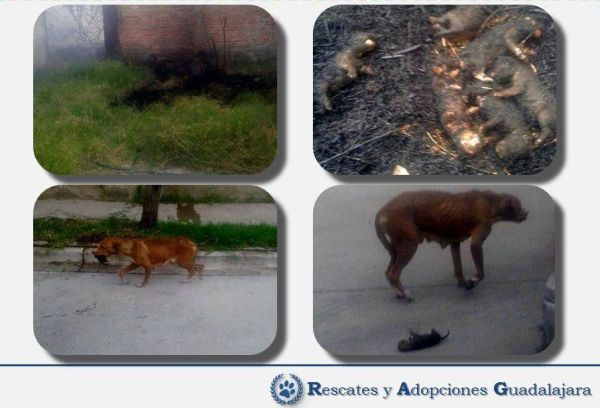 Rescate y Adopciones Guadalajara posted images of the inhumane attack.