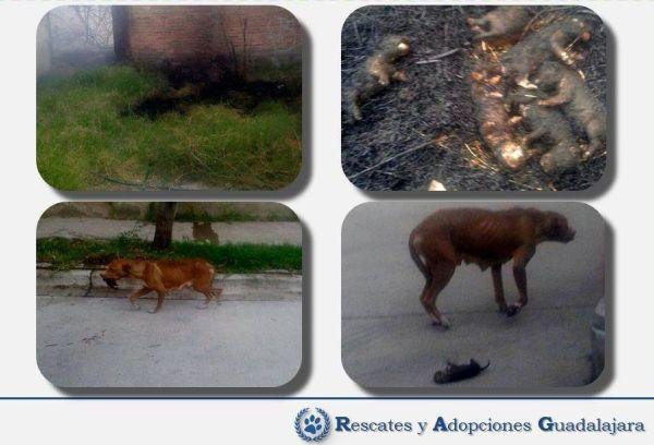 Rescate y Adopciones Guadalajara posted images of the inhumane attack.