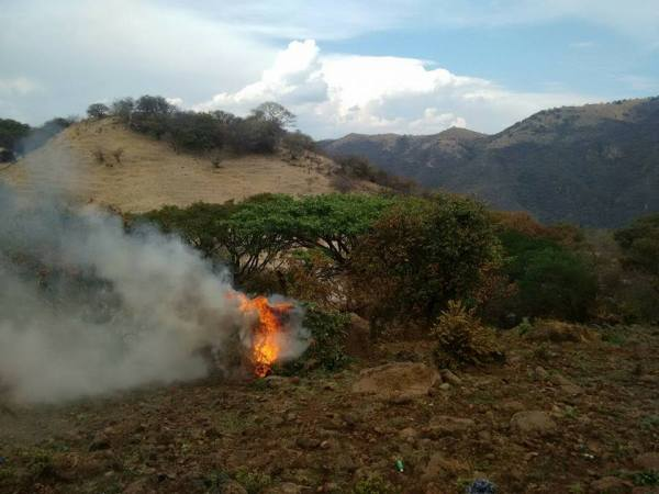 State police incinerated almost 90,000 marijuana crops at a plantation in Jalisco on Monday.